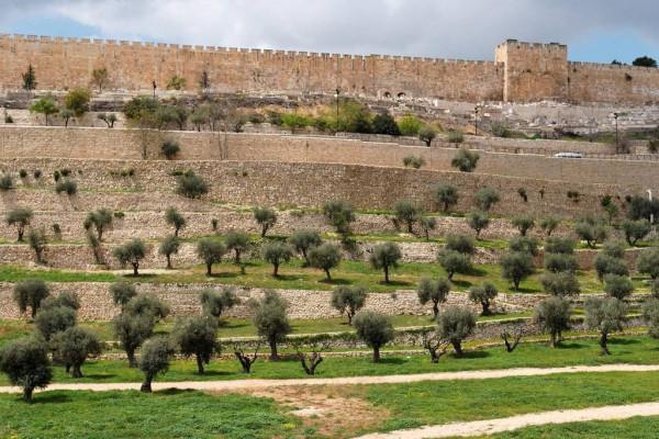 Valle de Cedrón, con la muralla de Jerusalén en el fondo.